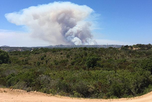 Corse : un incendie ravage plus de 100 hectares près de Bonifacio